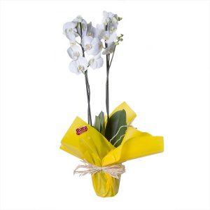 Orquidea con flores blancas