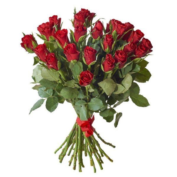 24 rosas rojas de regalo