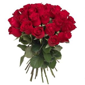 40 Rosas rojas