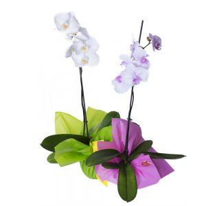 Orquidea 1 tallo de flores