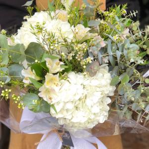 Hortensias blancas